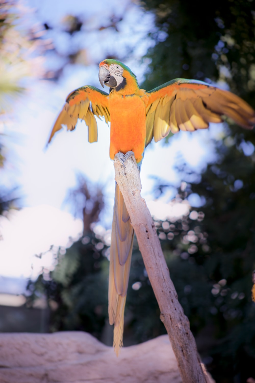 bird on branch during daytime