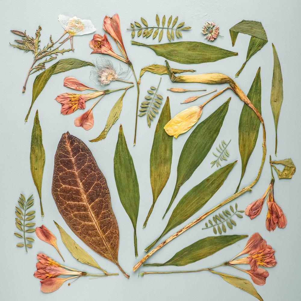 variety of leaves