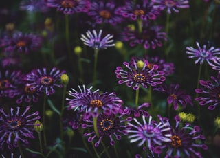 shallow focus photo of purple flowers