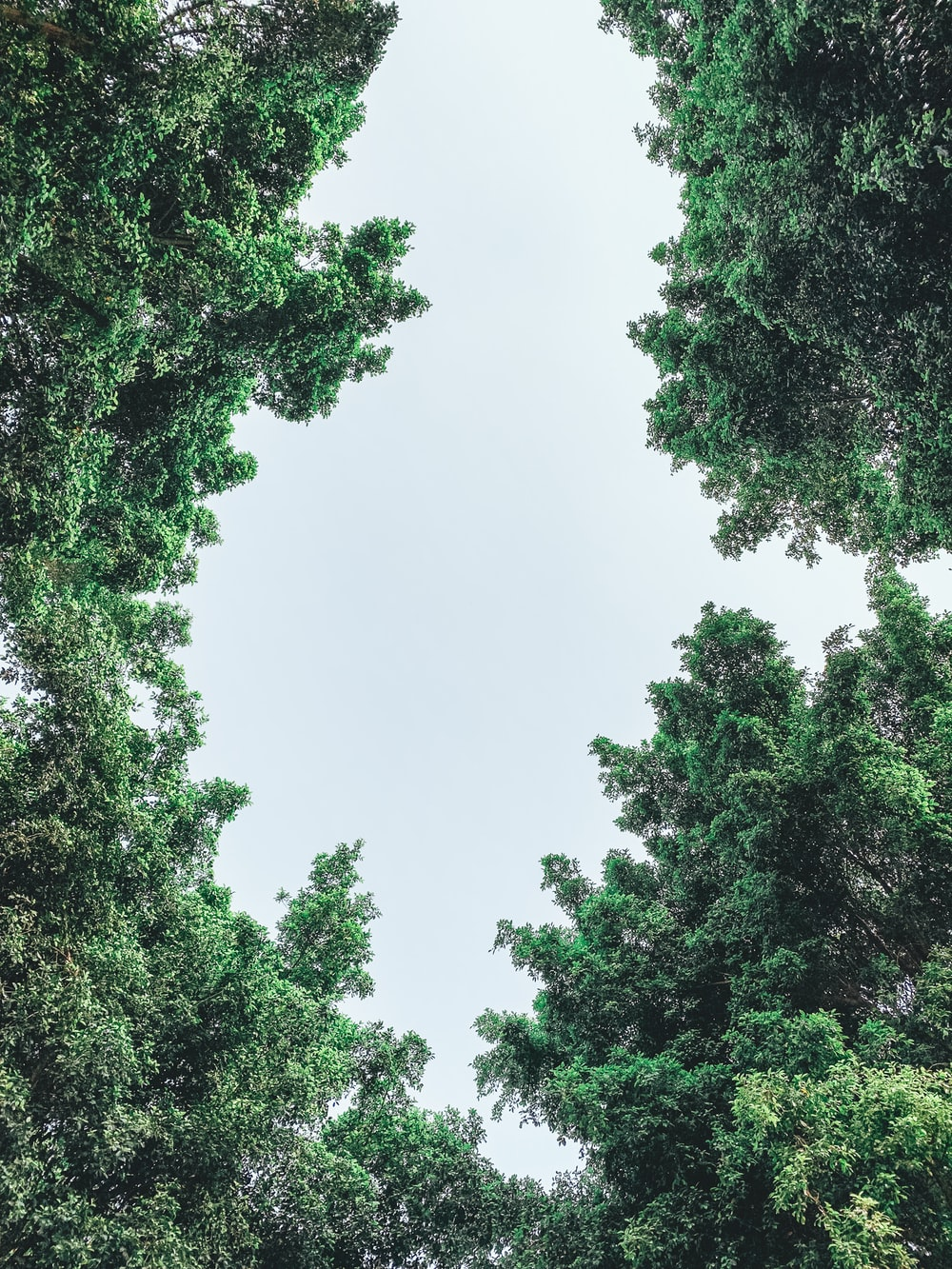 worm view photo of green trees
