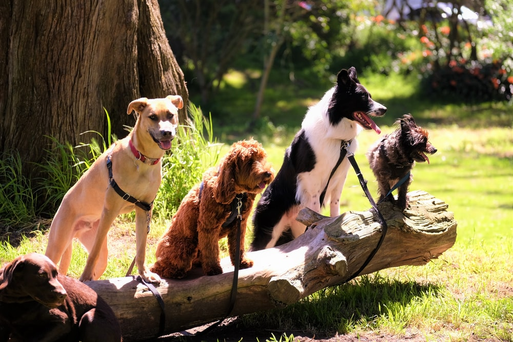 shallow focus photo of dogs on tree log