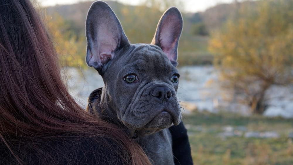 shallow focus photo of short-coated black dog
