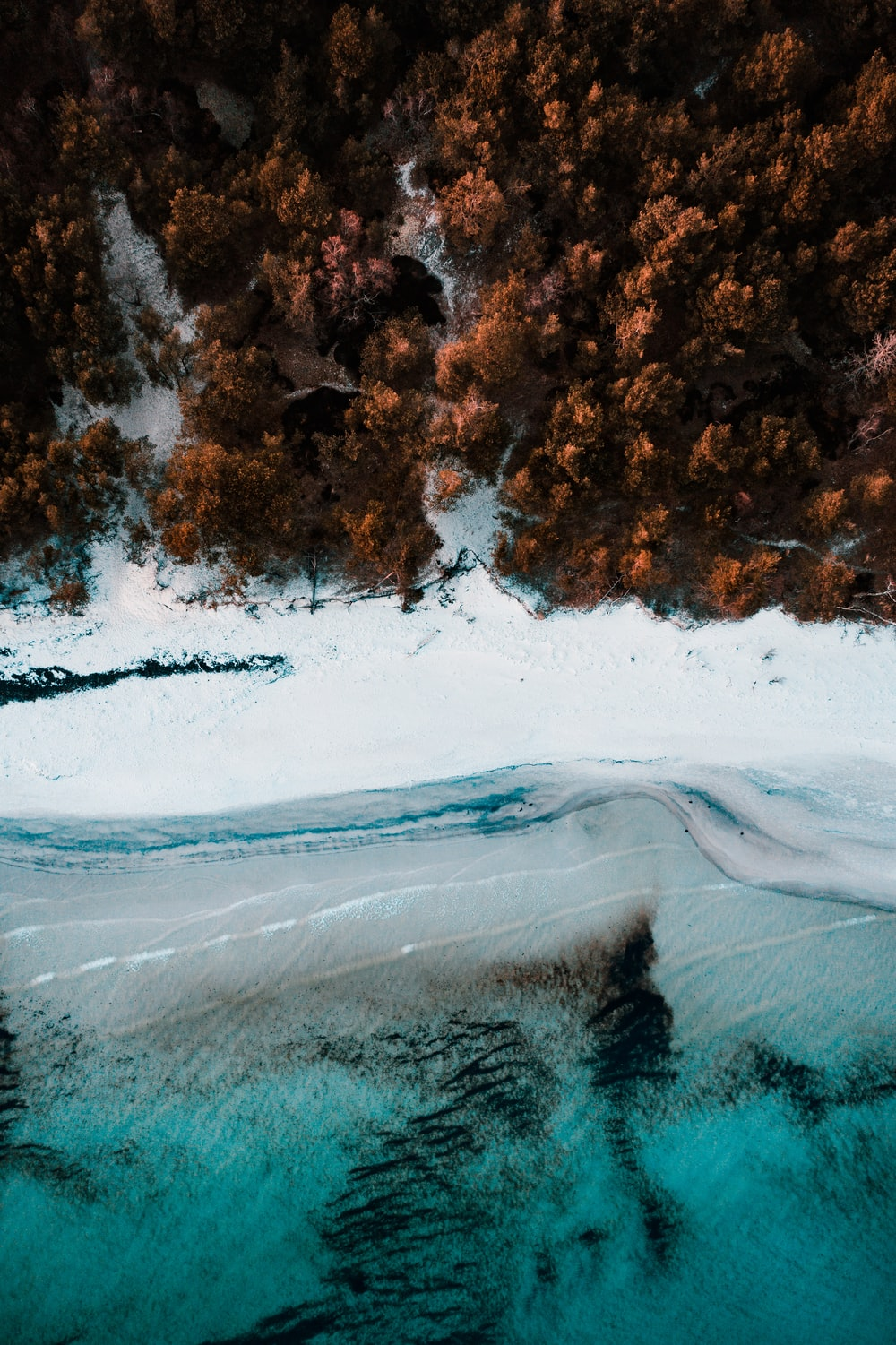 aerial photography of brown trees beside body of water