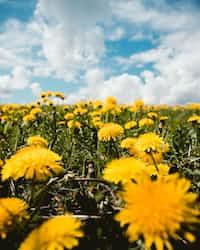 𝐓𝐇𝐄 𝐎𝐋𝐃 𝐆𝐎𝐃𝐒 𝐀𝐑𝐄 𝐃𝐄𝐀𝐃                [𝙳𝙰𝙽𝙳𝙴𝙻𝙸𝙾𝙽 𝙸 // 𝚁𝙴𝚃𝙾𝙻𝙳] dandelion stories