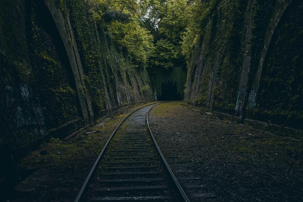 railroad between trees