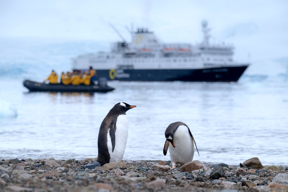 two penguins on shore