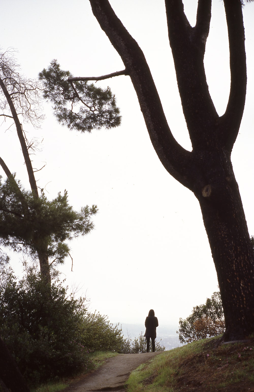 silhouette of person standing on road beside tree during daytime