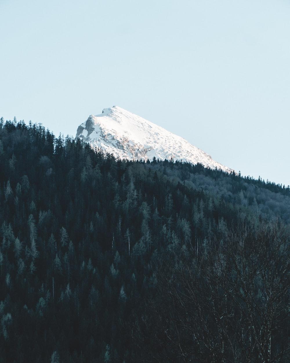white snow capped mountain peak across green pine forest