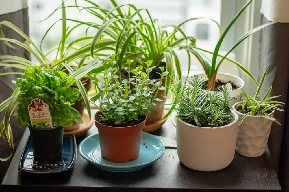 assorted potted indoor plants on table