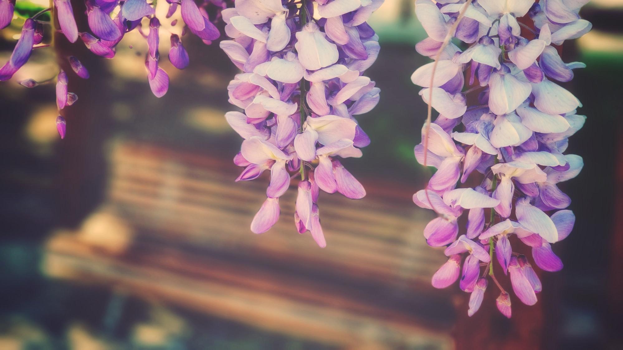 Japon Çiçek Düzenleme Sanatı Bulmaca Anlamı Nedir?