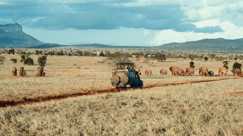 farm during daytime