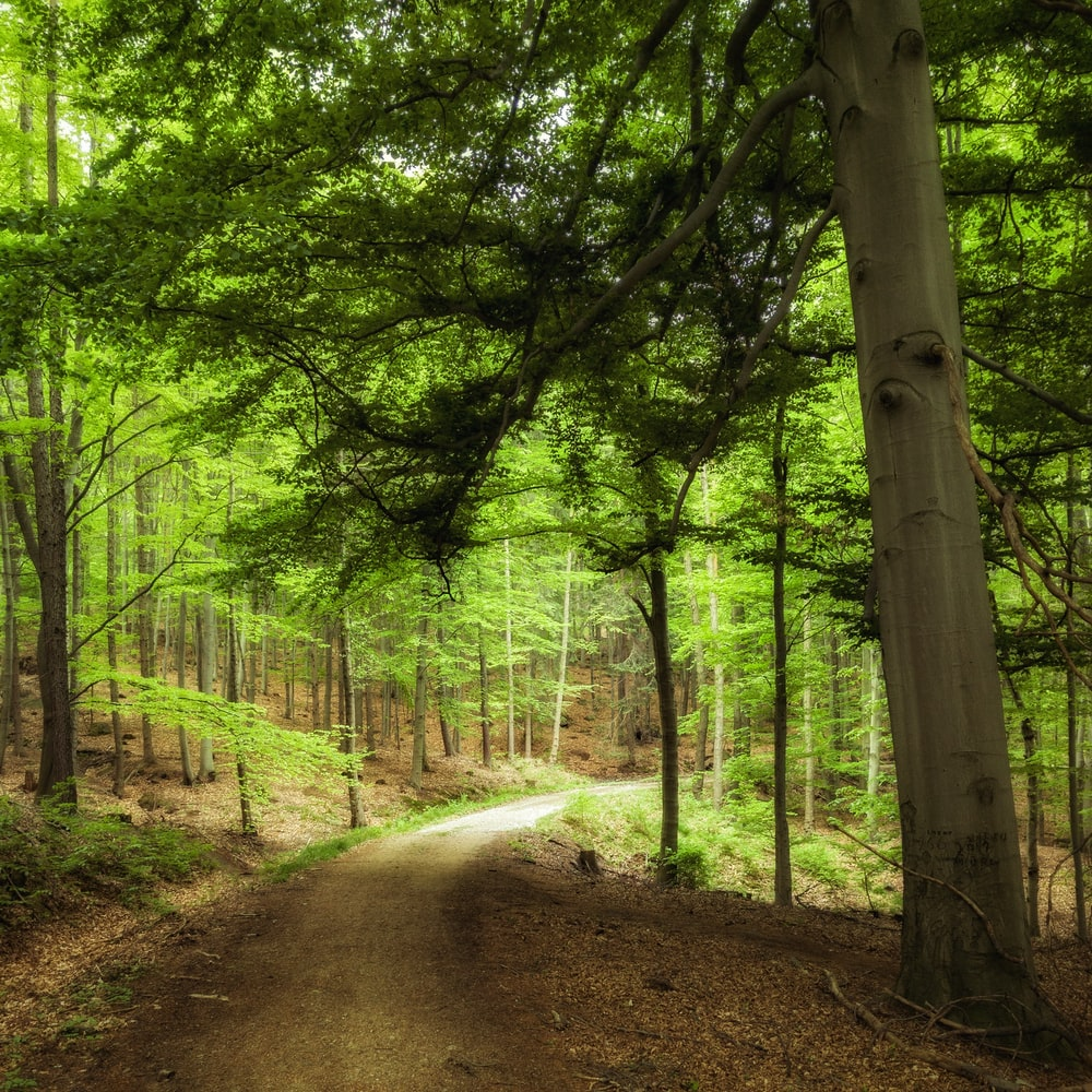 green leaf treees