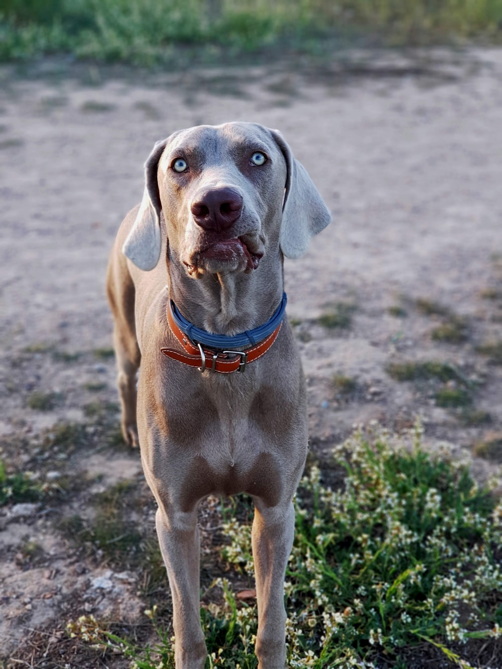 adult short-coated brown dog besides green plant photo