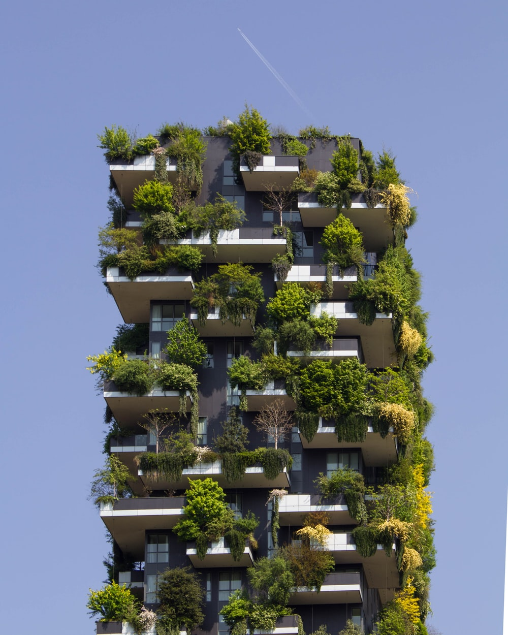 building covered in plants