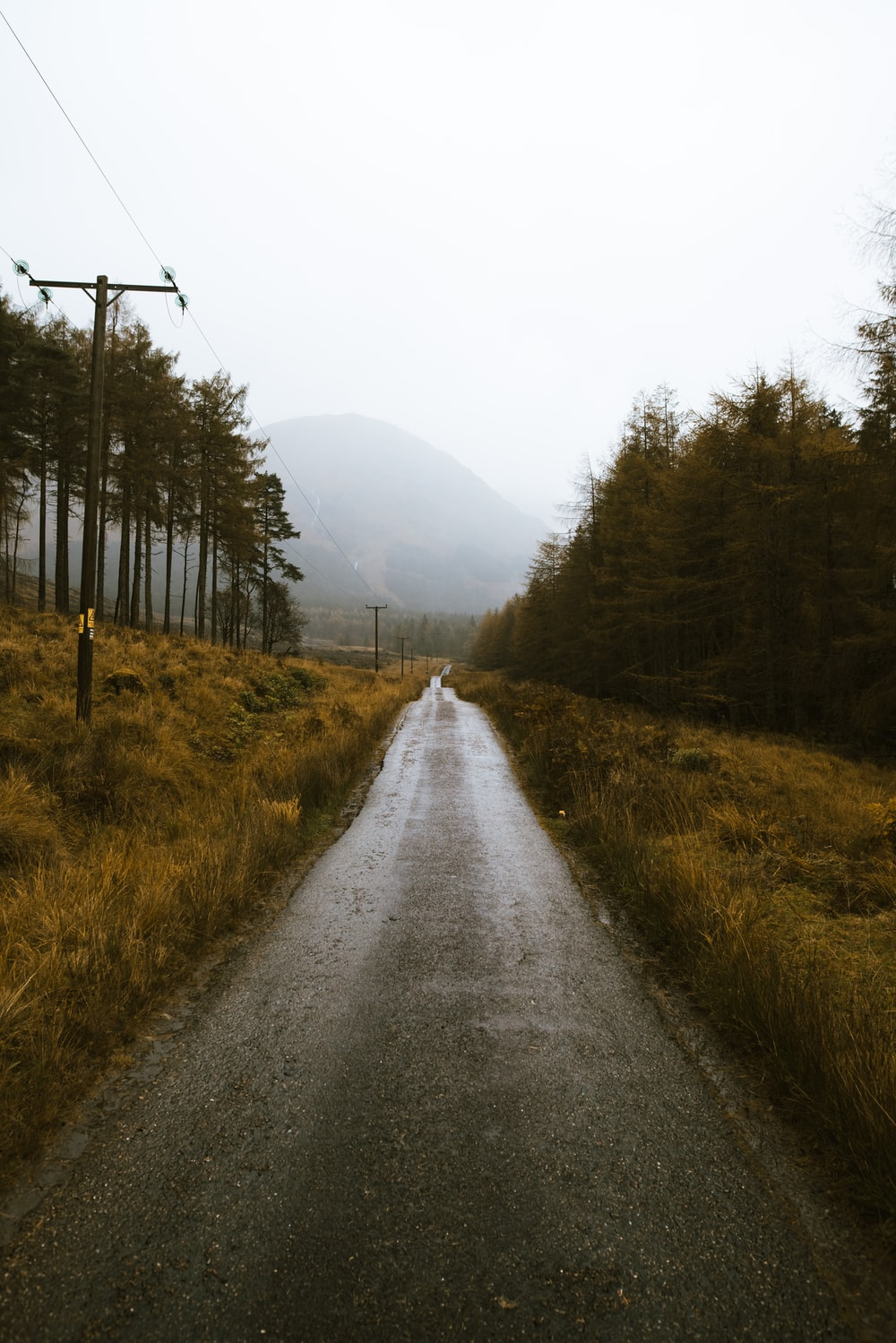 empty dirt road between grasses