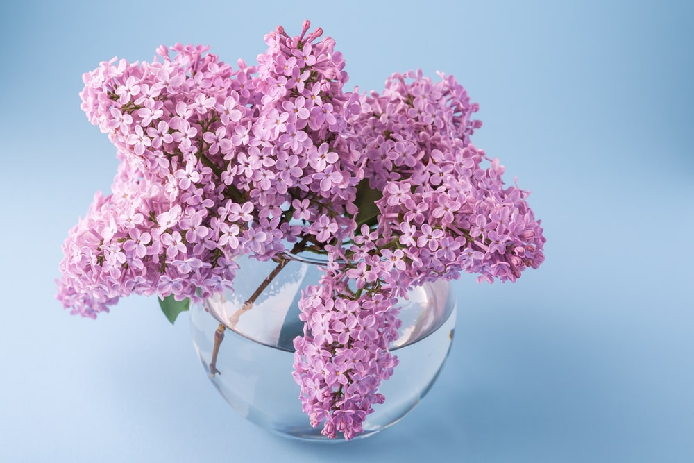 pink flower in clear bowl