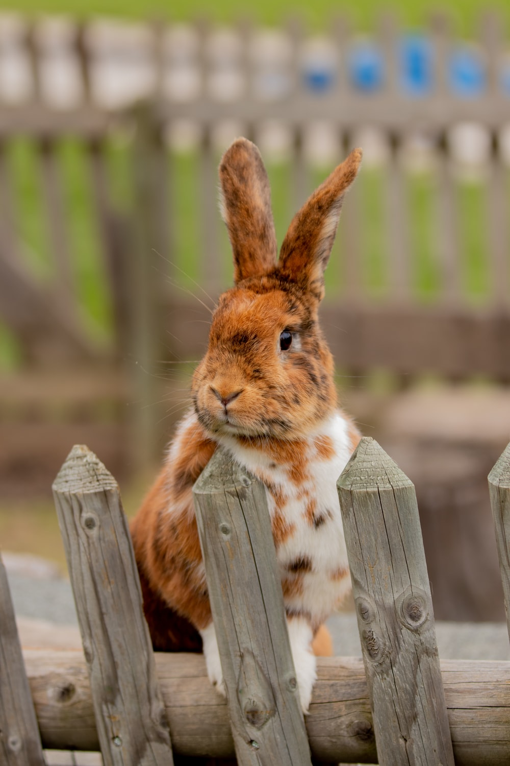 white and brown rabbit on grey fence