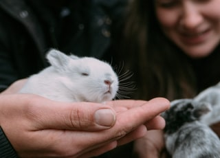 selective focus photography of rabbit on person's hand