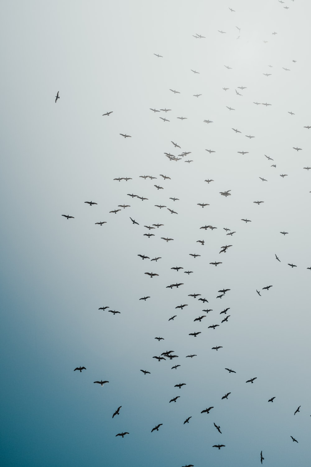 black birds flying during daytime