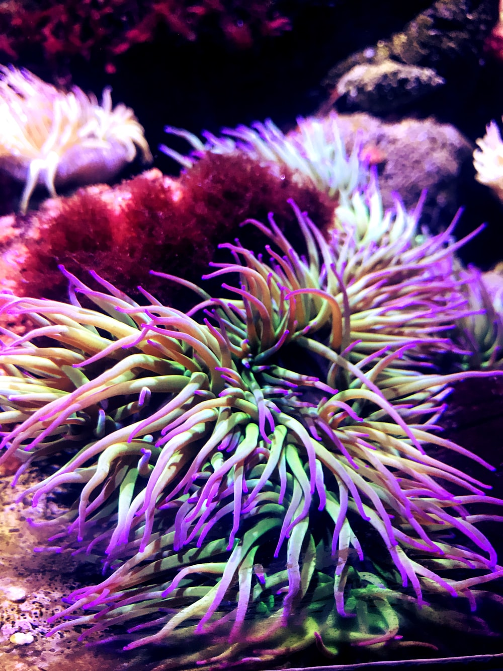 purple and white sea plants