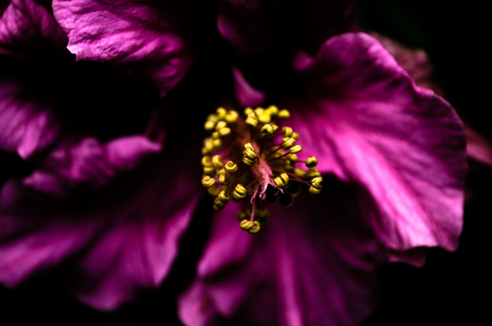 pink petaled flower close-up photography