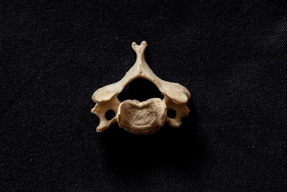 close-up photo of brown bone