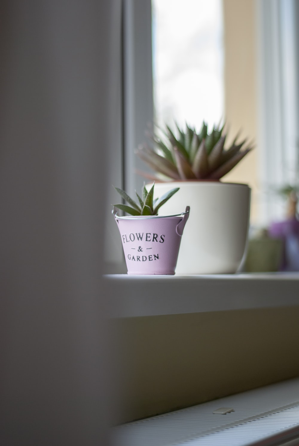 close-up photo of green potted succulen plant