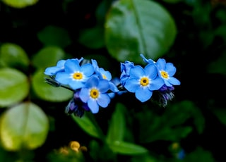 selected focus photography of blue petaled flowers