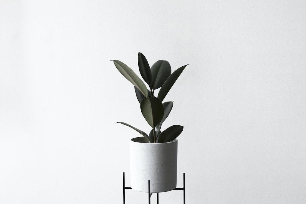 potted green leaf plant