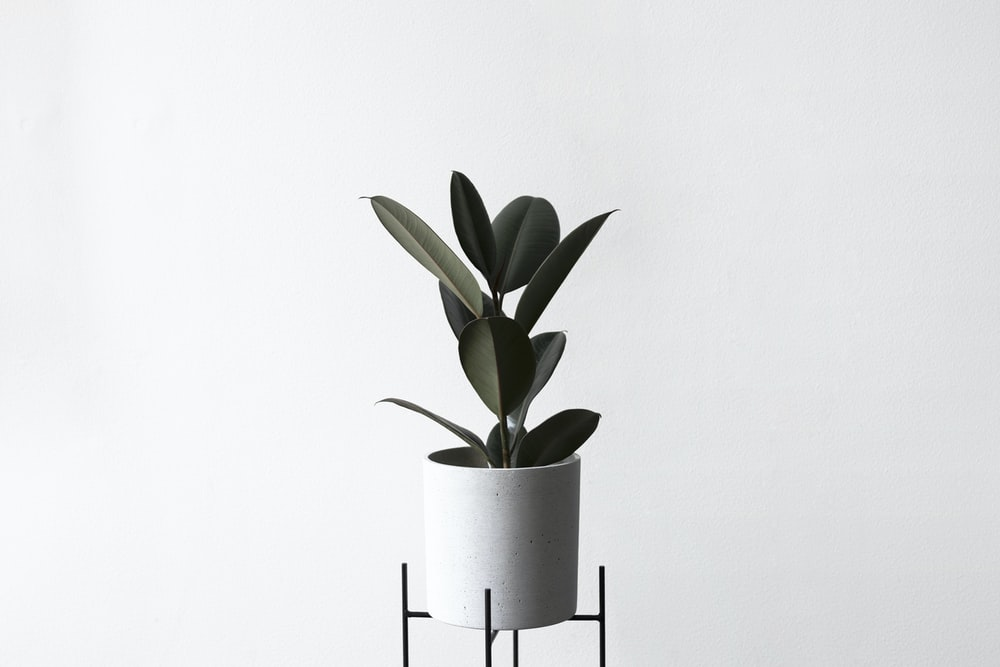 potted green leaf plant