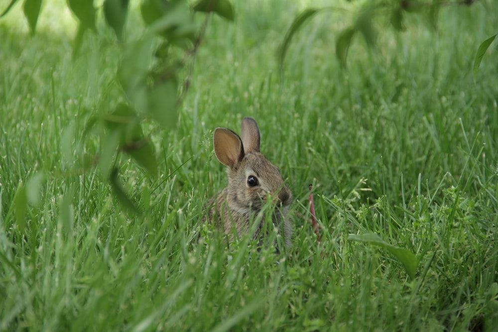 shallow focus photo of gray rabbit