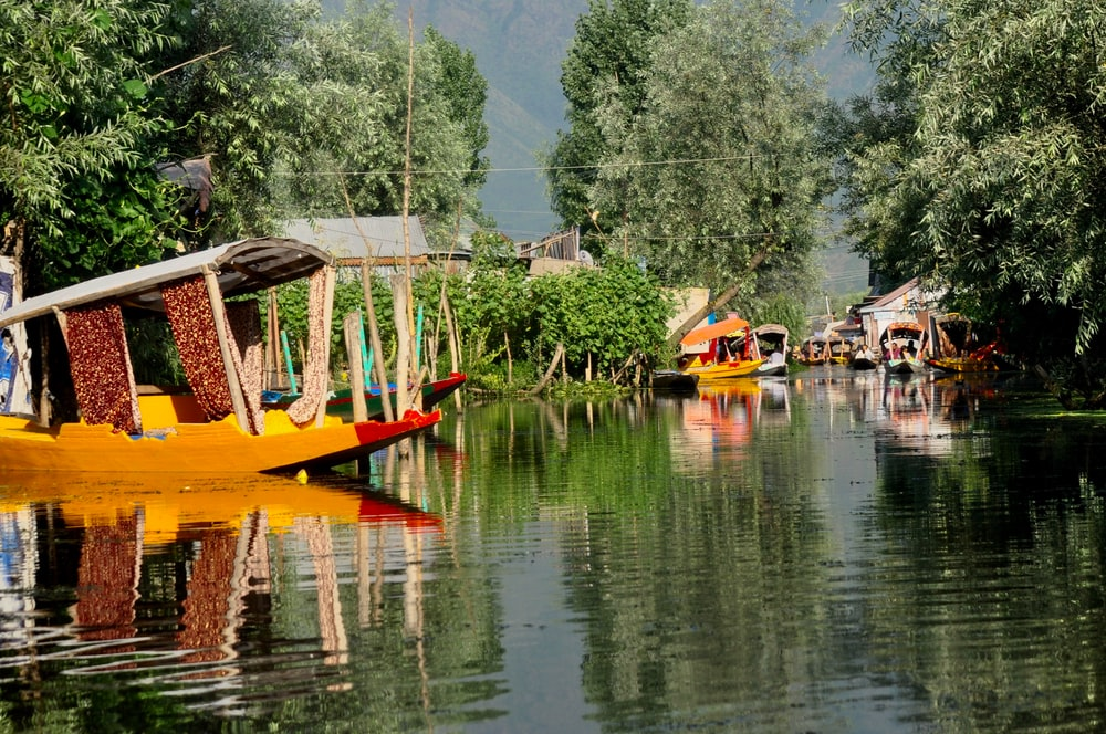 boats in body of water near trees