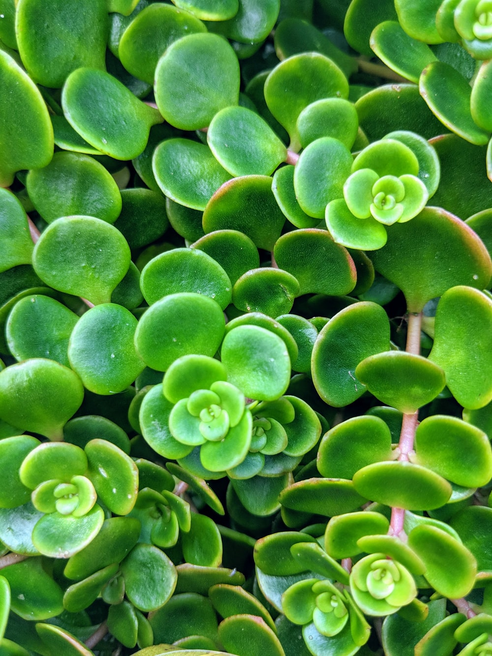close-up photography of succulent plant
