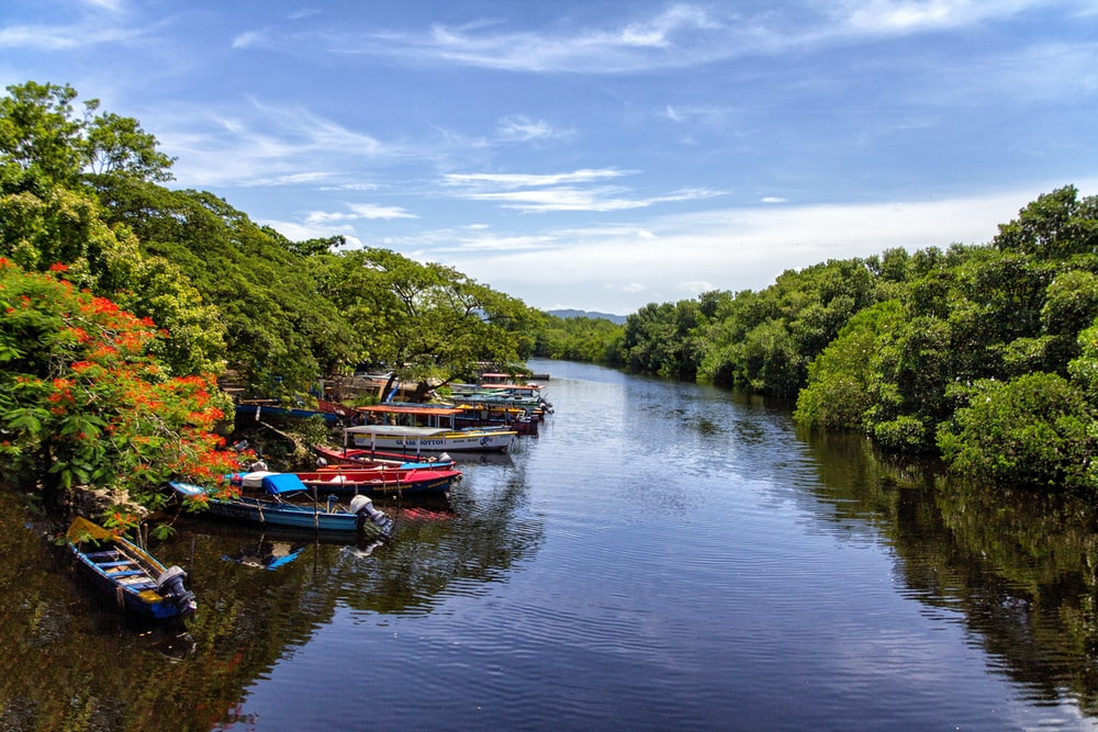 boats docked beside trees on river