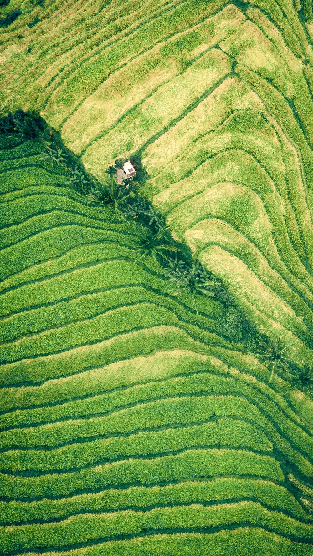 rice terraces aerial view