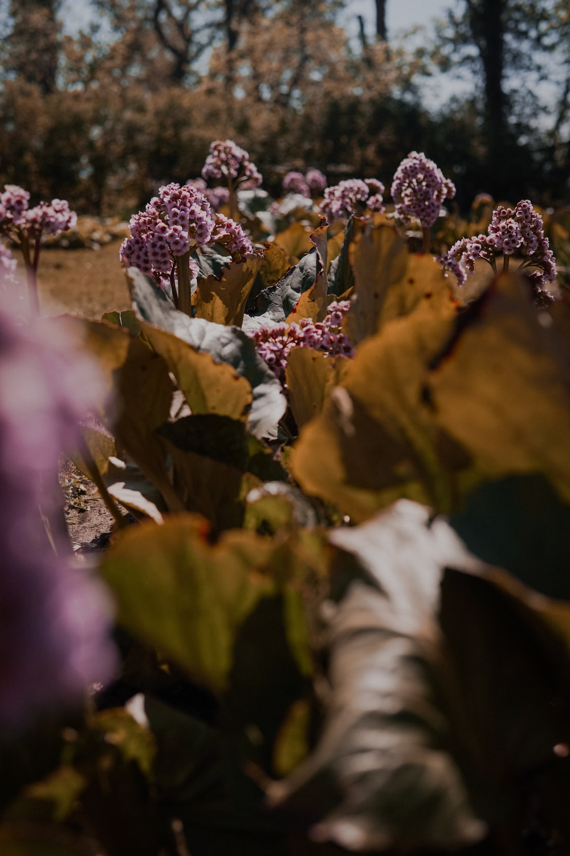 purple petaled flower blooming during daytime