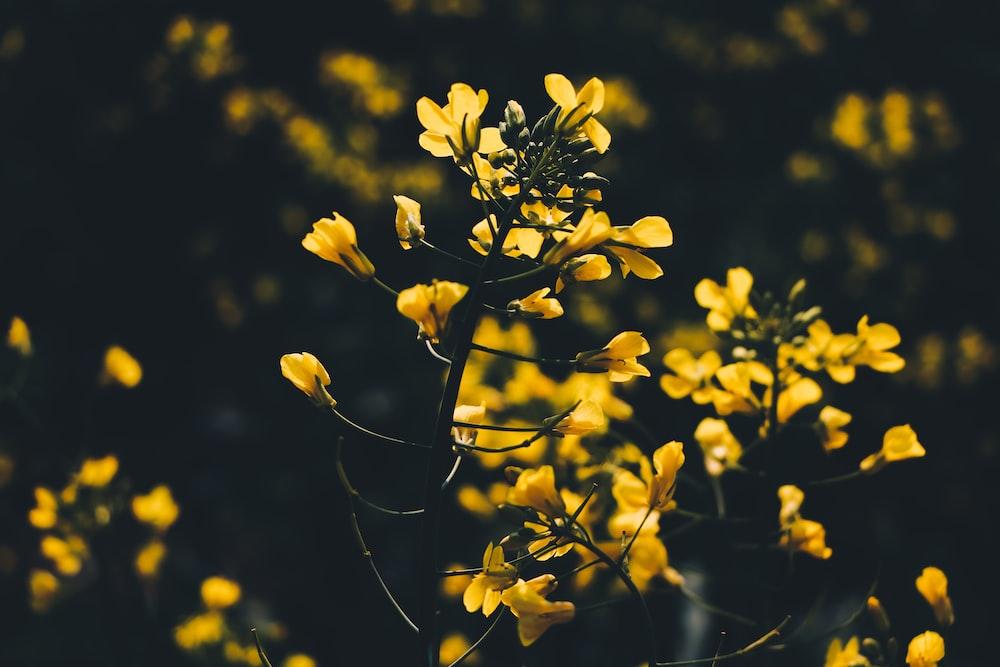 Flower, leaf, plant and blossom | HD photo by Kasturi Roy
