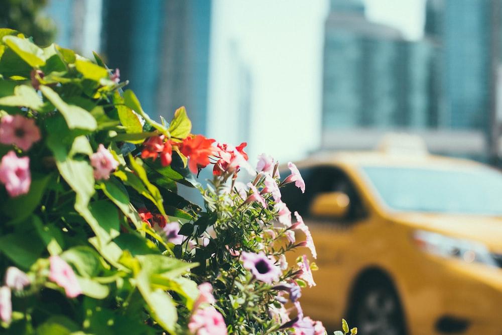 taxi beside flower decor
