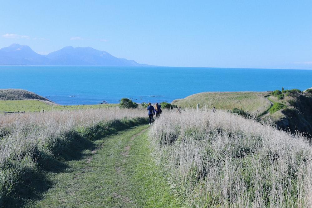 two people walking near grass field