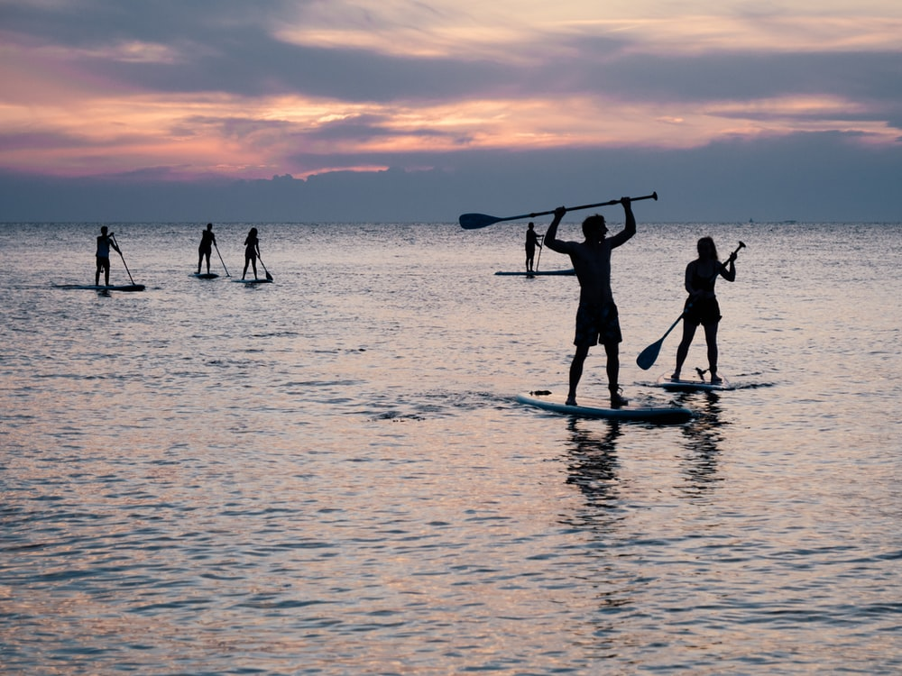 silhouette photo of people riding on paddle boards