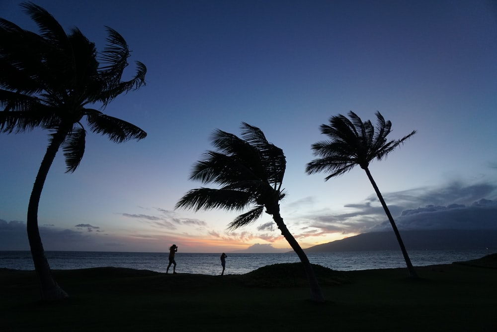 silhouette of two people standing near palm trees during sunset