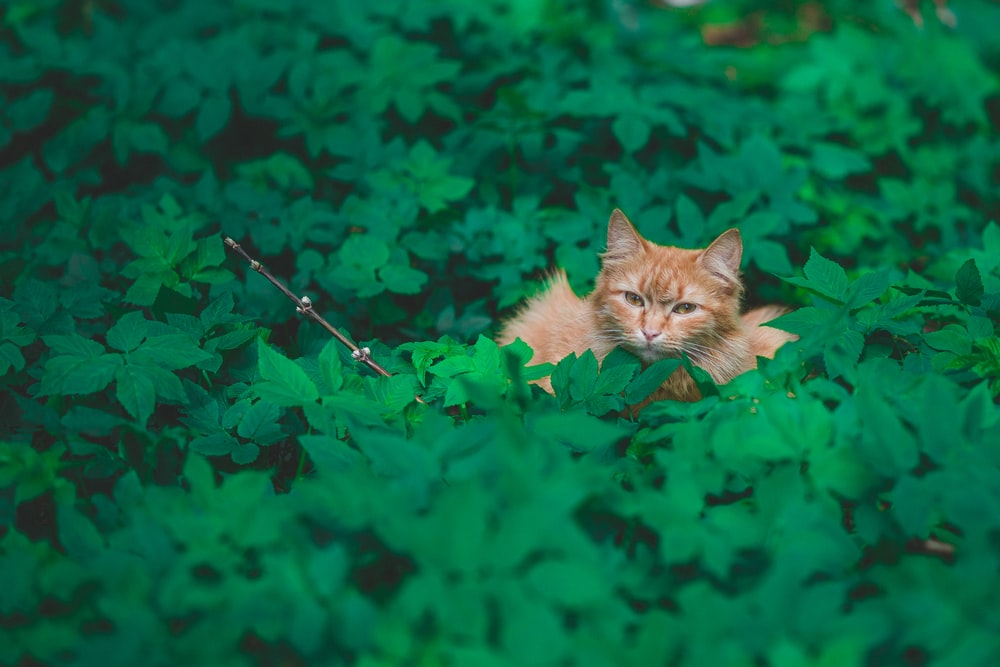 tabby cat sitting on green leafed plants