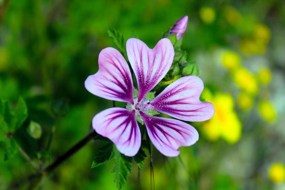 purple petaled fower