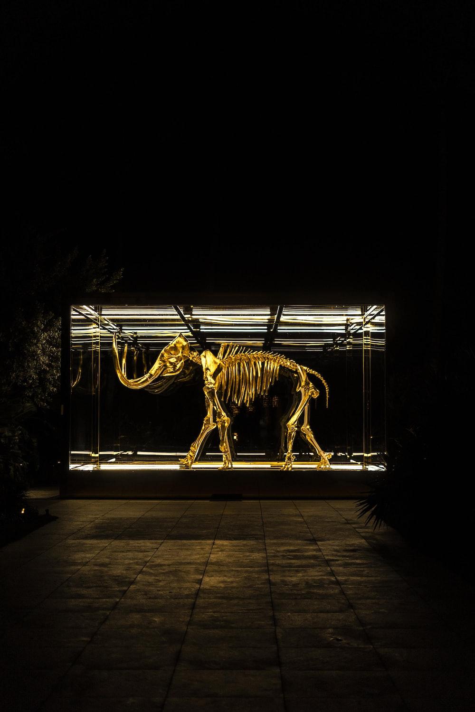 elephant skeleton in glass