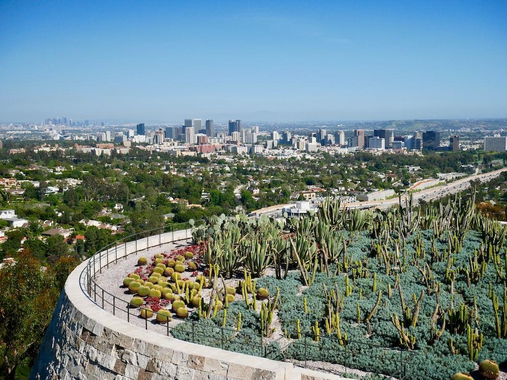 aerial view of cactus garden near city