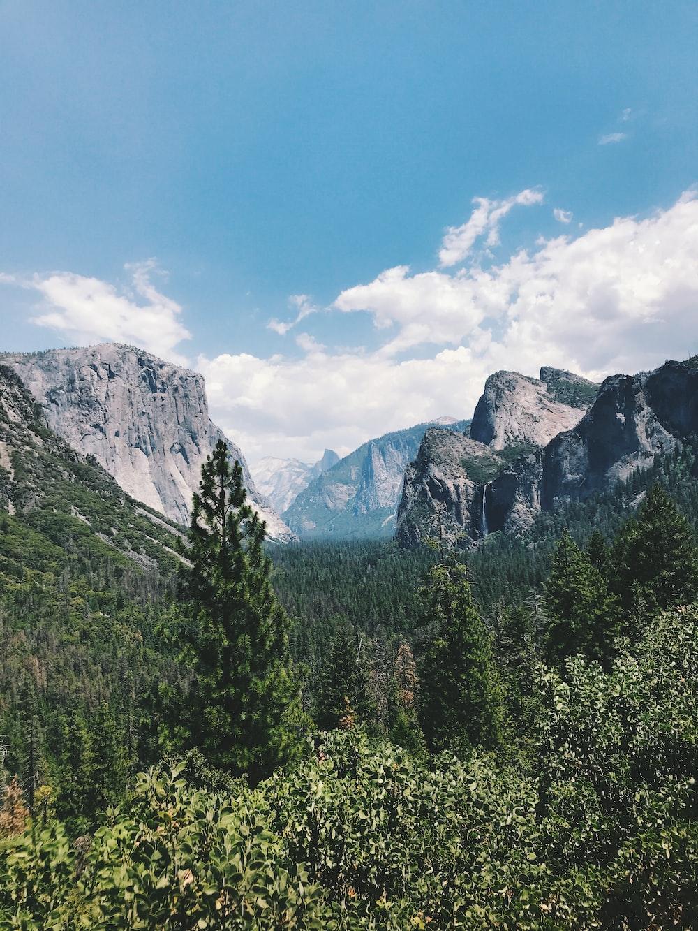 green pine tree and mountain