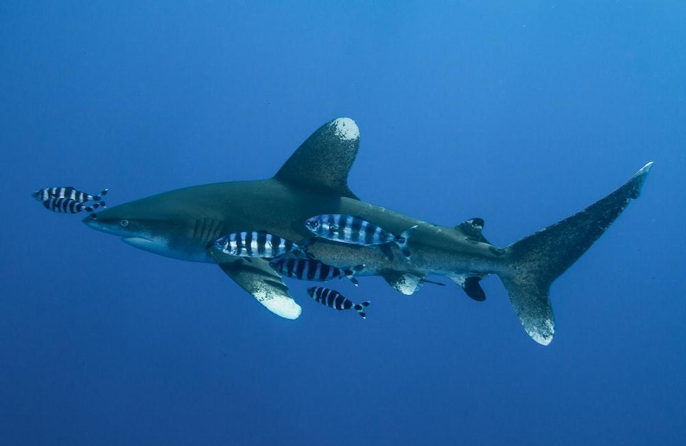 illustration of green shark