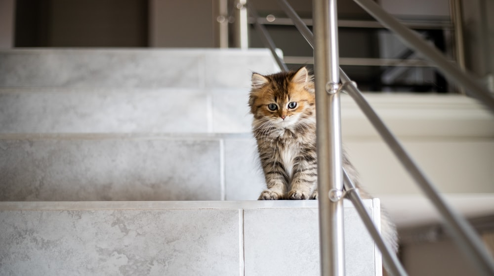 medium-furred brown cat