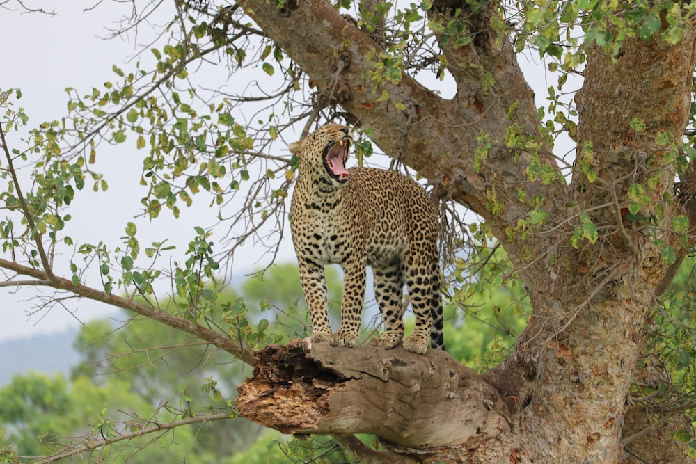 leopard on tree during daytime