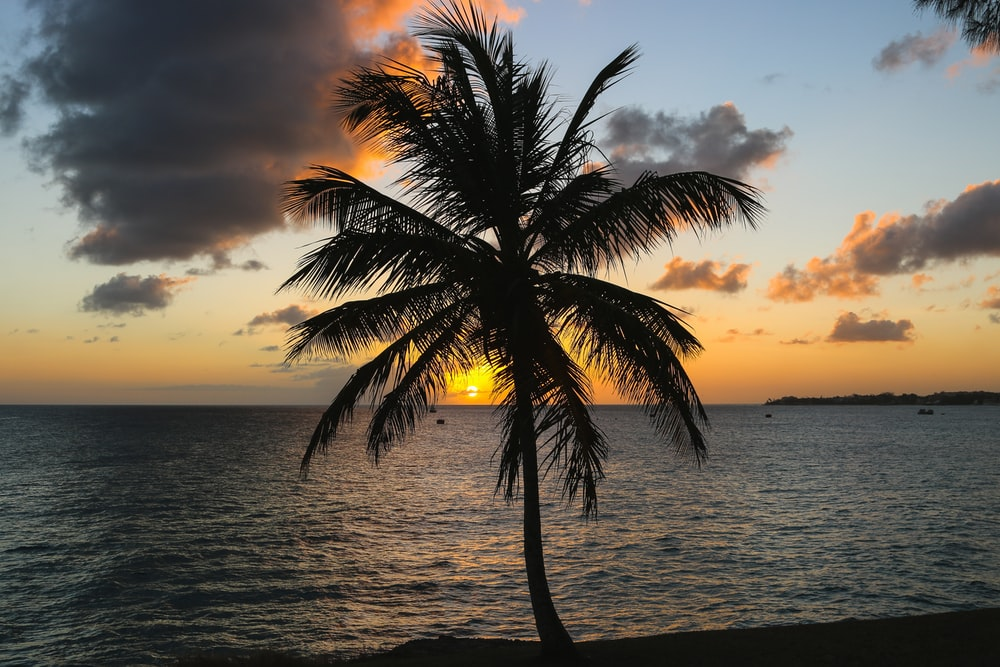 silhouette of palm tree beside body of water during golden hour